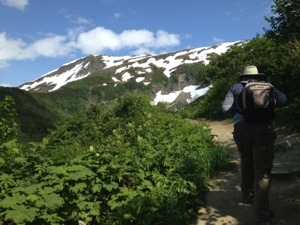Hiking trail above Juneau