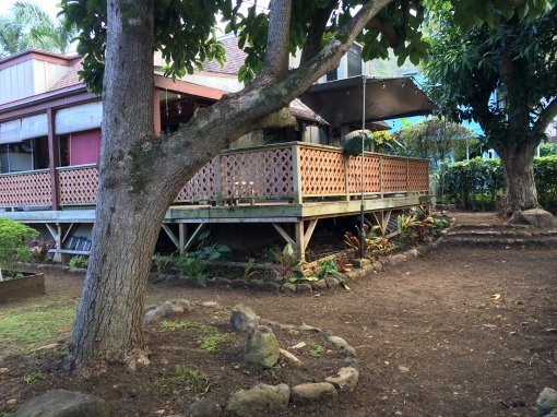 "Weʻre looking forward to a carpet of green grass in the back. The brown lath will extend down from the deck. the ""keepers"" are the avocado tree, left, and the mango tree, at right."